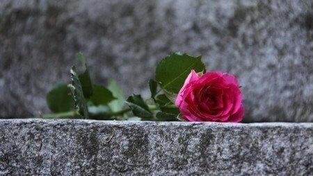 Rose 21 e1380828556235
