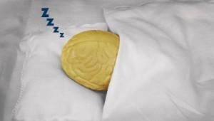 schlafen hirn klein