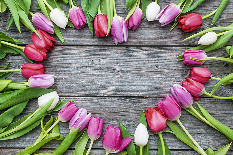 Empty frame of fresh tulips arranged on old wooden background with copy space for your message