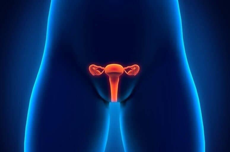 lage darm gebärmutter