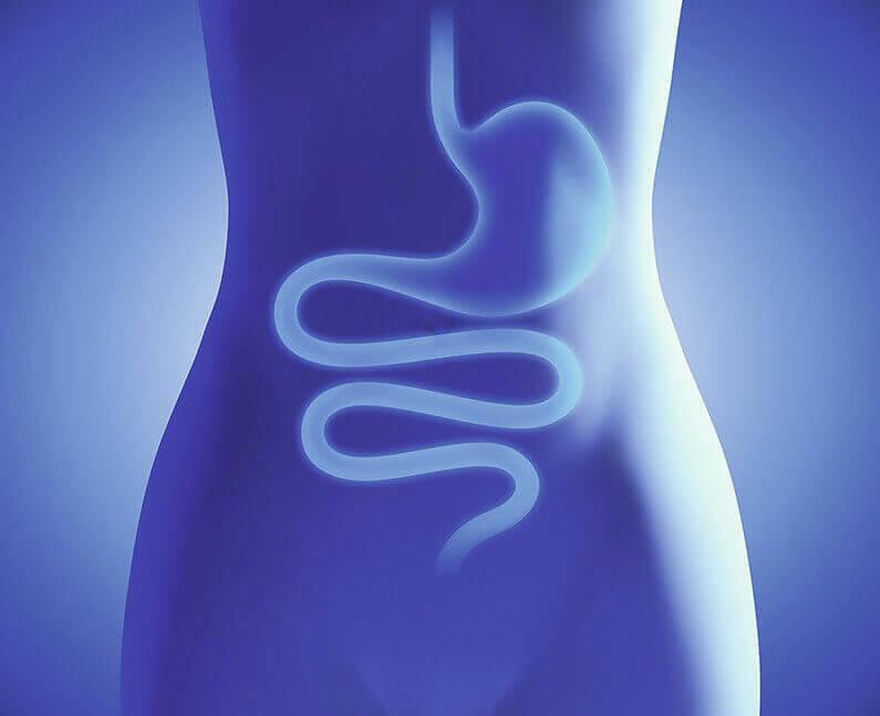 Symbiolact Darm 34650744