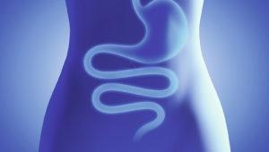 Magen, Darm, Verdauungstrakt