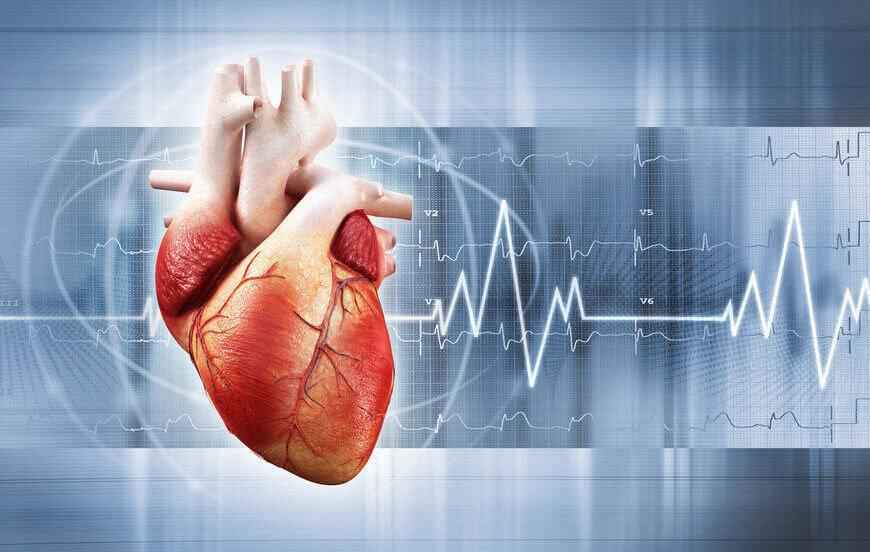 Herz EKG Urheber adimas Fotolia.com