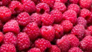 Ripe raspberry background