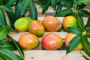 Mango neu