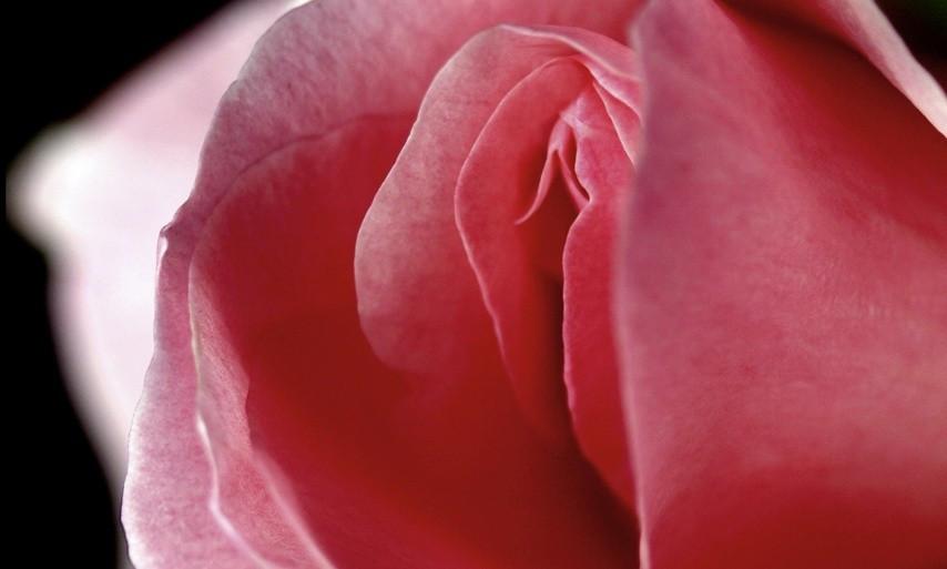 Klitoris Bild AdobeStock Urheber Munimara