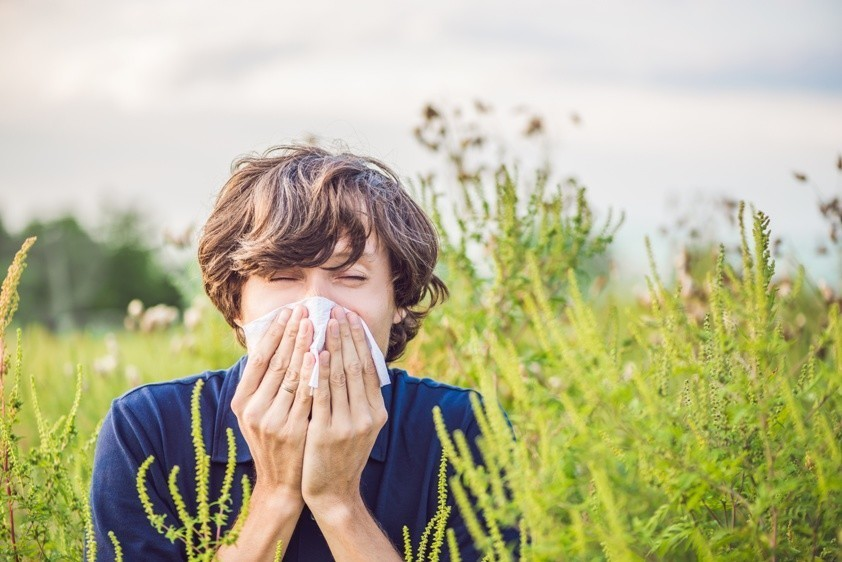 Pollen Bild AdobeStock Urheber galitskaya