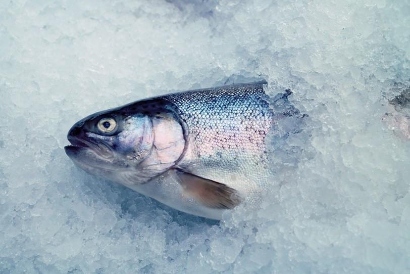 Fisch Bild AdobeStock Urheber Fanfo